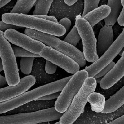 Microscope rendering of bacteria