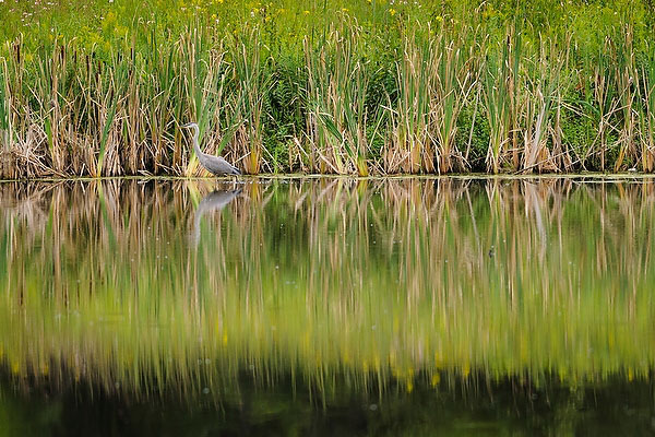 prairie grass reflected on water