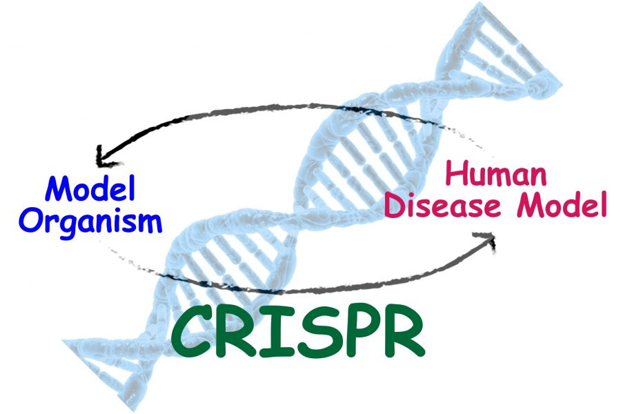 Graphic of Advancing CRISPR
