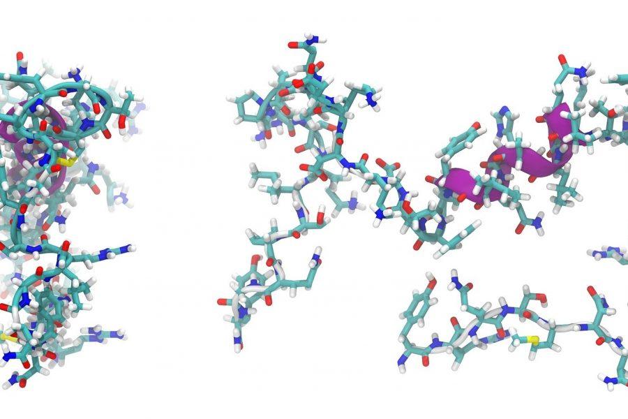 Peptide Array